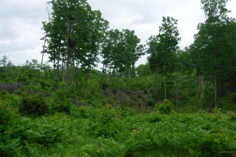 TBD Route 16 Concord Twp ME 04290