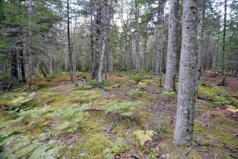 1 Driftwood Way Mount Desert ME 04660