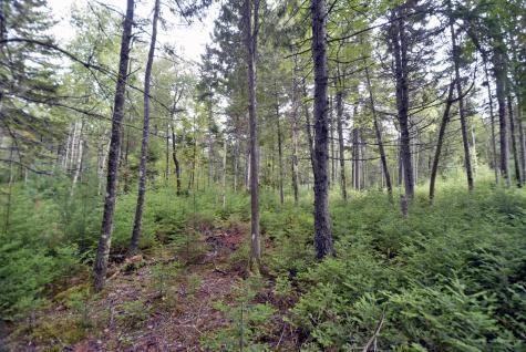Lot 1 Driftwood Way Mount Desert ME 04660