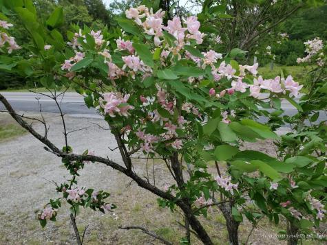 940 Acadia Highway Orland ME 04472