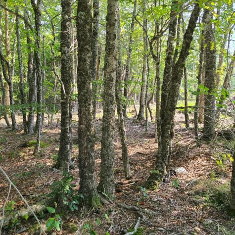 West Toddy Lane Blue Hill ME 04614