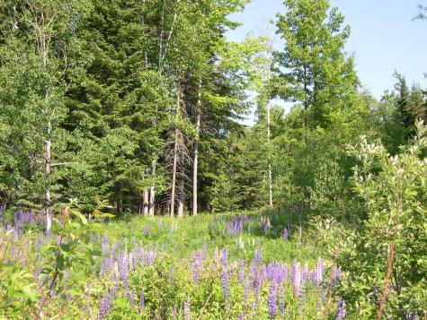 Lot 103 Stratton Road Rangeley ME 04970
