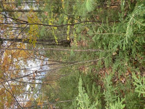 Lot 4 Oak Hill Drive Woodstock ME 04219
