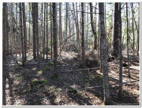 Lot 11 Paul Bunyan Road Gouldsboro ME 04607