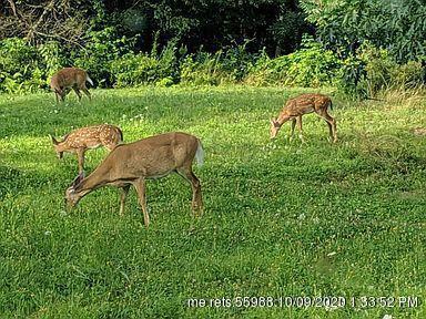 73 Ledgewood Drive Bucksport ME 04416